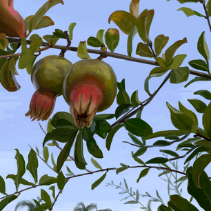 Painting study of a pomegranate bush