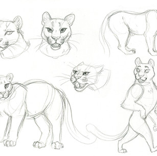 Mountain lion studies