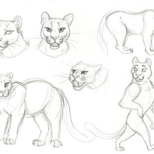 Mountain lion studies