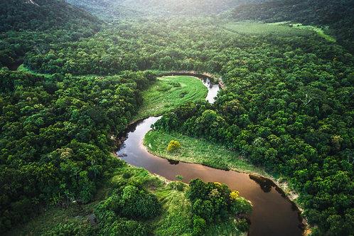 PP_33_THE AMAZON
