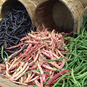 Are legumes and pulses the same?