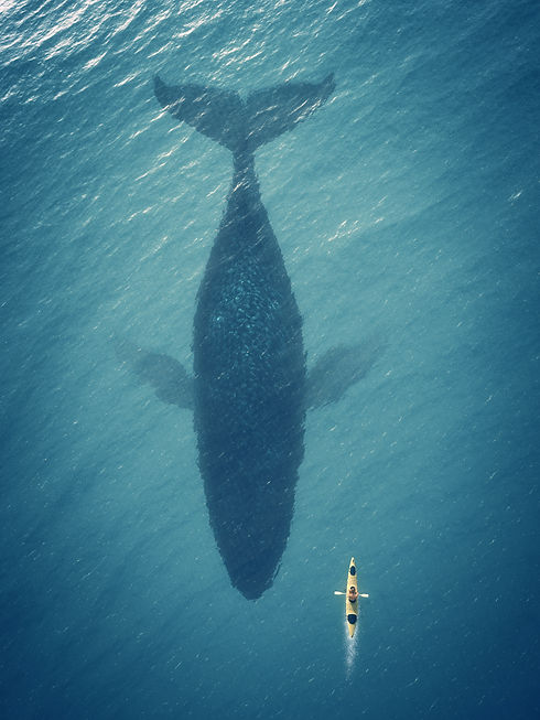 Whale underneath small kayak in the ocean