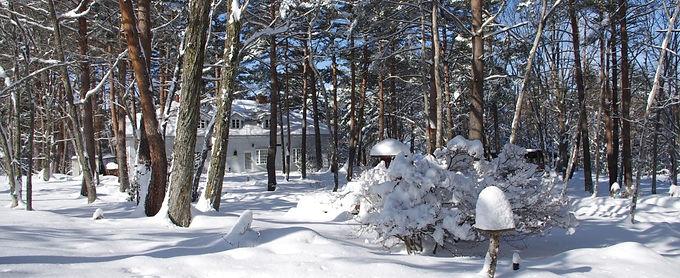 ベルエールの森