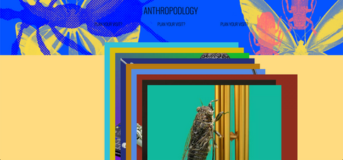 ANTHROPODLOGY x Natural History Museum