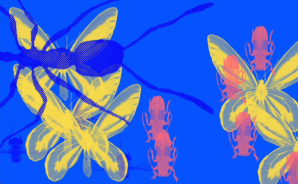 insecttap.png