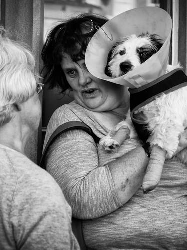 Suffering dog