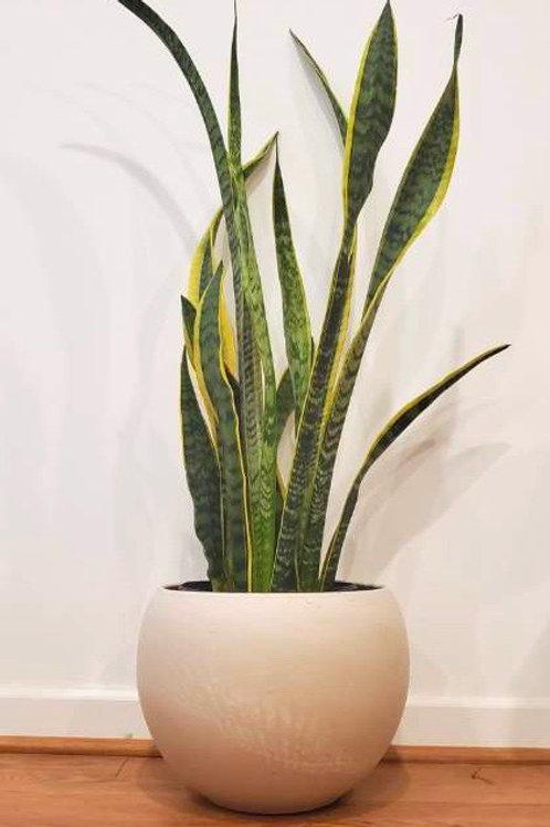 Modern White Round Planter- 2 Sizes Available