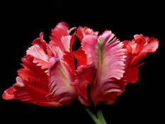 #37 SERIE Flora