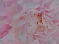 #80 SERIE Flora