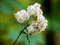 #35 SERIE Flora