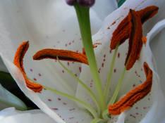 #57 SERIE Flora