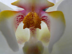 #54 SERIE Flora