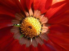 #76 SERIE Flora
