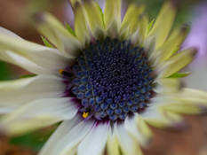 #51 SERIE Flora