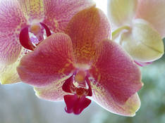 #49 SERIE Flora