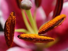#48 SERIE Flora
