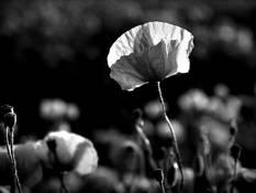 #45 SERIE Flora