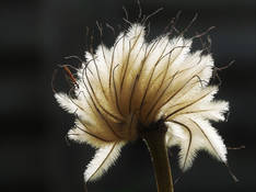 #44 SERIE Flora