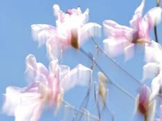 #86 SERIE Flora