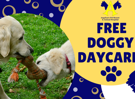 FREE Doggy Daycare for Essential Workers!