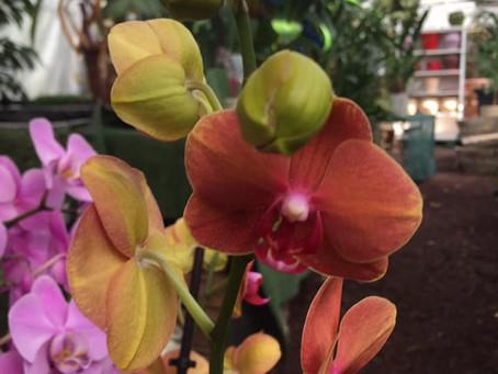Les orchidées à la Jardinerie Farigoulette à Hyères