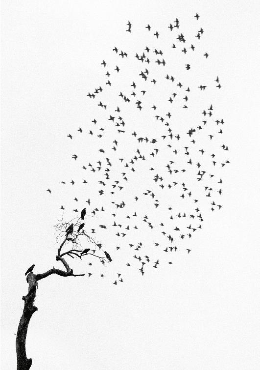 Pentti Sammallahti, « Miniatures »