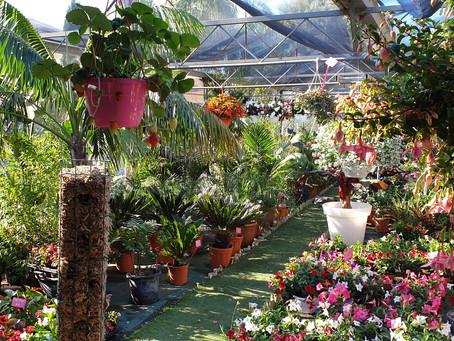 Jardinerie Farigoulette à Hyères