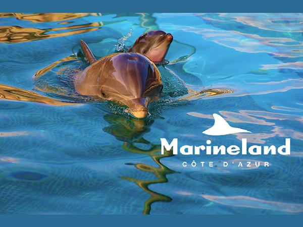 Nous avons tant de moments magiques à partager avec vous..Bienvenue à Marineland, saison 2020 !