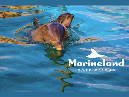 Marineland : Votre programme pour les vacances de la Toussaint !