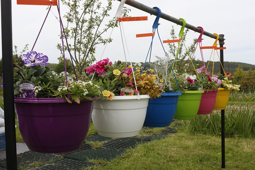 Pot My Hanging Basket  (Potting Service)