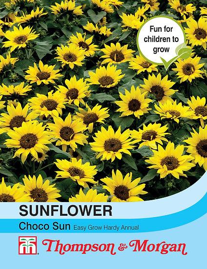 Sun Flower ChocoSun