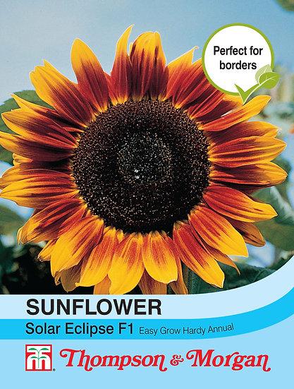 Sun Flower Solar Eclipse