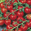 Thumbnail: Tomato Red Cherry