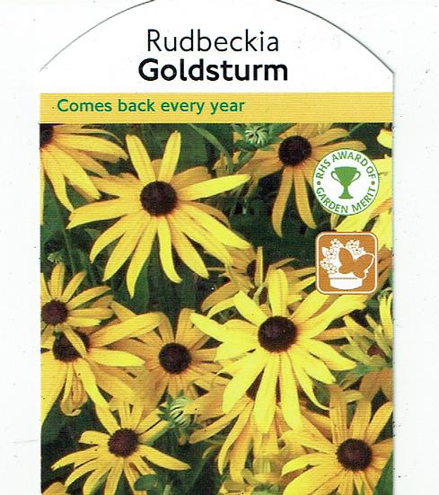 Rudbeckia Goldstrum (Black Eyed Susan)