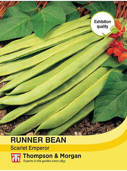 "Runner Bean ""Scarlet Emperor"""