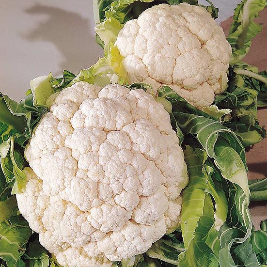 Cauliflower Snowball  6 Cell