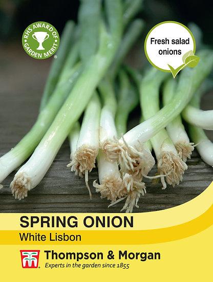 SPring Onion White Lisbon