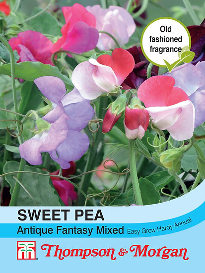 Sweet Pea Antique Fantasy Mixed