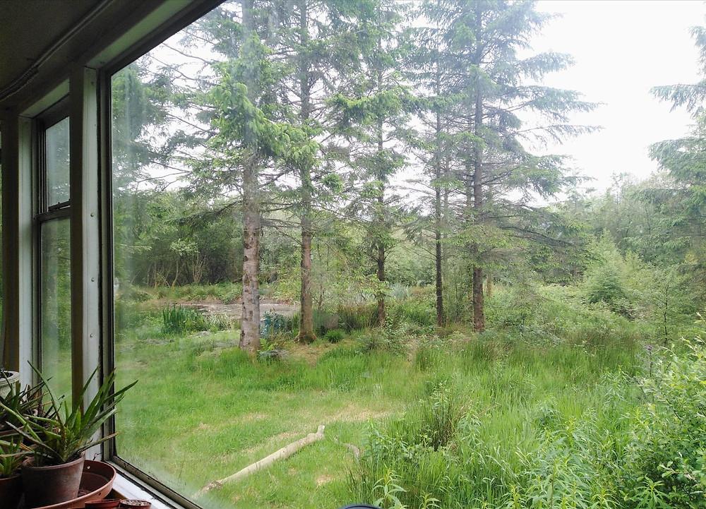 woodland scene from caravan window