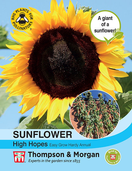 Sun Flower High Hopes