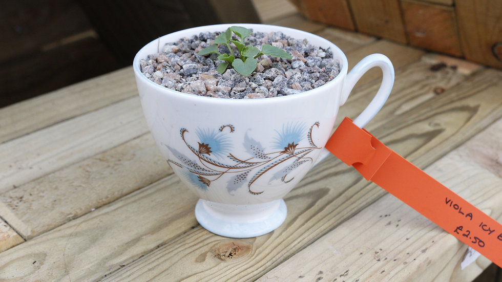 Potted Ceramic Christmas Gifts
