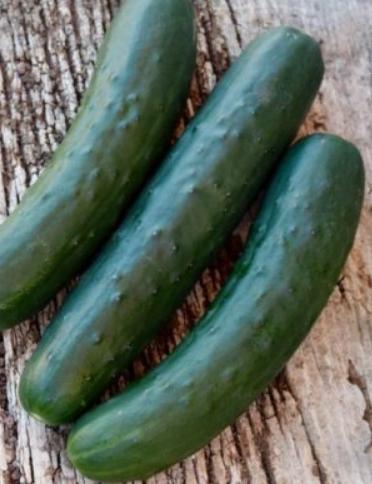"Cucumber ""Marketmore"" (Organic)"