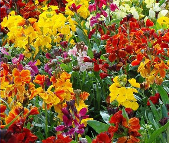 Wall Flower Persian Carpet mix