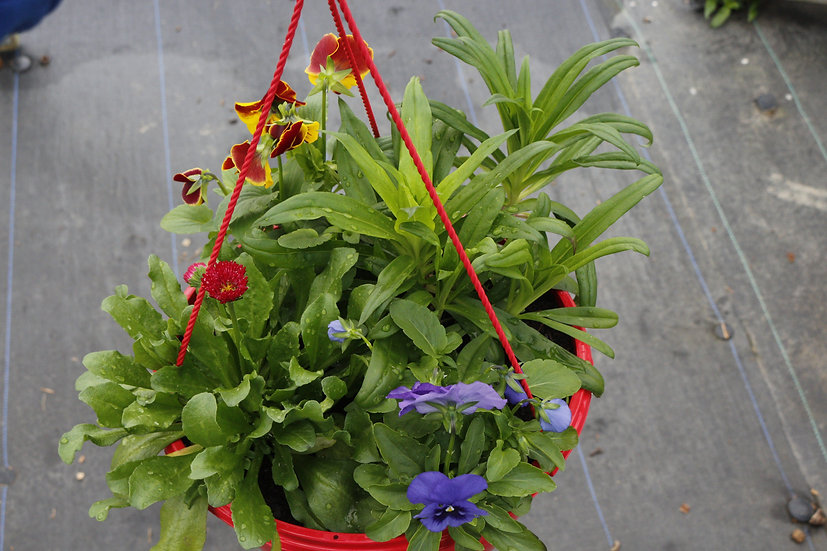 Winter Hanging Baskets Ready-to-Go