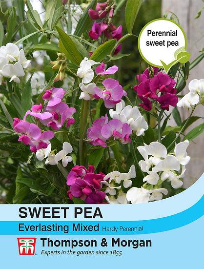 Sweet Pea Everlasting Mixed (Lathyrus)