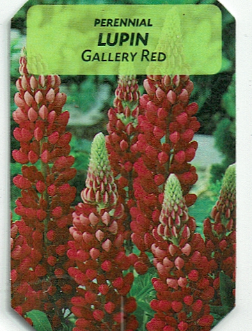 """Lupin """"Gallery Red"""""""