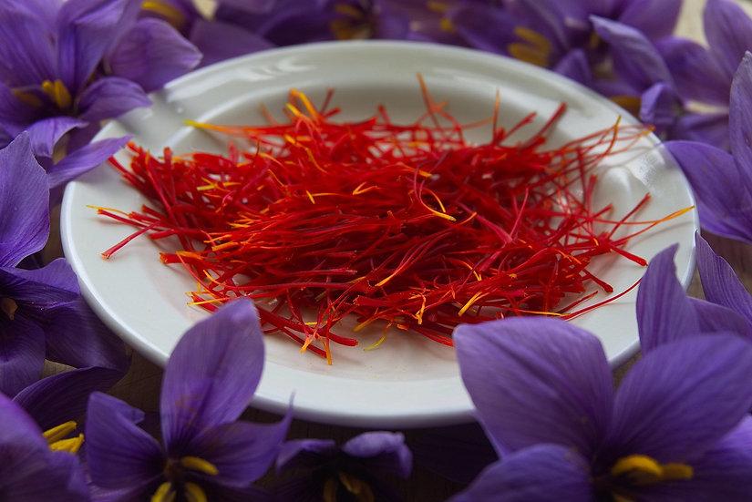 Saffron Crocus - Crocus Sativus