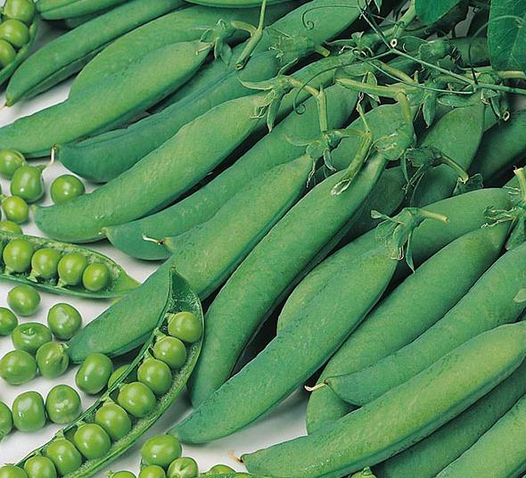 "Peas ""Hurst Green Shaft"""
