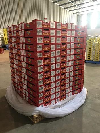 Avocado Export Company Exporting to Japan