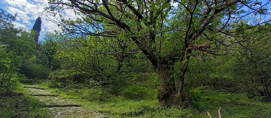 Medieval path to the village Gornji Stoliv in Bay of Kotor